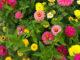 Газон с цветами