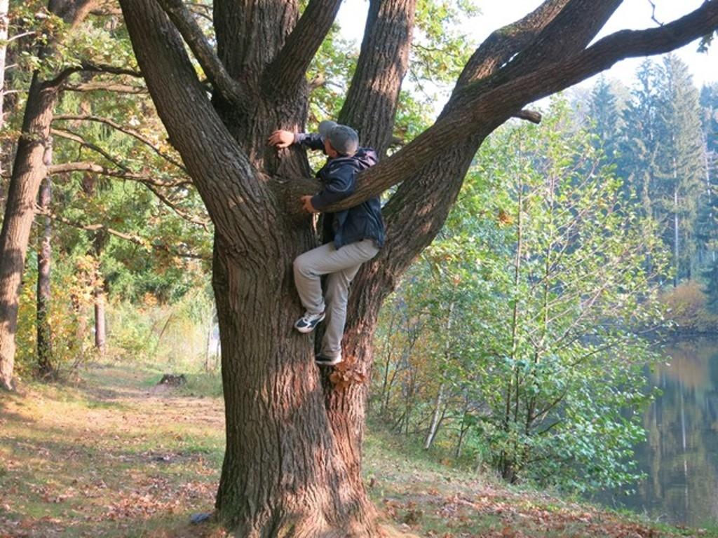 Широкий ствол дерева
