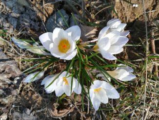 5 причин любить весну
