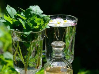 Растения лекарственные